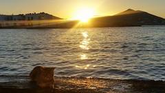 """Puoi anche tramontare che io me ne """"sbaffo""""... (Connie.101) Tags: gatto cat tramonto sunset grecia cicladi paros isola sun sole mare sea riflessi greece estate summer"""