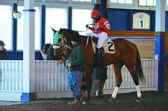 "2017-02-10 (29) r9 #2 Katie Davis on #2 Hard Thunder (JLeeFleenor) Tags: photos photography md marylandhorseracing maryland laurelpark outside outdoors jockey جُوكِي ""赛马骑师"" jinete ""競馬騎手"" dżokej jocheu คนขี่ม้าแข่ง jóquei žokej kilparatsastaja rennreiter fantino ""경마 기수"" жокей jokey người horses thoroughbreds equine equestrian cheval cavalo cavallo cavall caballo pferd paard perd hevonen hest hestur cal kon konj beygir capall ceffyl cuddy yarraman faras alogo soos kuda uma pfeerd koin حصان кон 马 häst άλογο סוס घोड़ा 馬 koń лошадь femme femaleathletes femalejockey paddock"