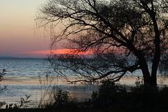 DSC_1997 (cybr_gio) Tags: lago uccelli pesci acqua perugia umbria trasimeno isola oasi magione naturale polvese