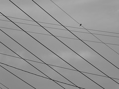 Mourning Dove and Power Lines_P1170809 (Wampa-One) Tags: blackandwhite bird lines silhouette dove powerlines missouri mourningdove parallelogram intersecting manchestermo