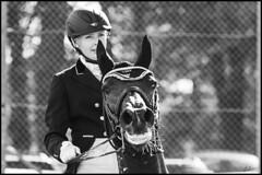 KHS08 (Nicke B) Tags: show horses horse animals sweden maria riding sverige horseshow equestrian kalmar falk djur 2015 hstar nicklas dressyr uppvisning blomqvist fredriksskans fotonicke photonicke kalmarhorseshow