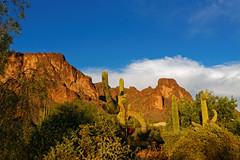 BackYard View (CThomasCaldwell) Tags: arizona 5dmk3 superstitionmountainapachejunction ef35f2isusm