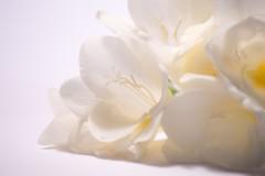 (joaquingnazzo) Tags: flowers naturaleza white flores detalle blanco nature photo nikon foto fotografia photoart nikond3200 200mmlens nikonistas nikonphotography fotografosuy igers igersuruguay nikontop igersuy igersmvd igersmontevideo instagramersuruguay nikonistasuruguay audiovisualuruguay