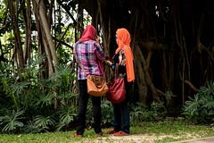 (m4rtinovic) Tags: travel summer food zeiss monkey asia jungle malaysia kualalumpur tanahrata cameronhighlands malaka distagon langtengah pulaulangtengah bohtea zeisslenses sonya7 fe24240