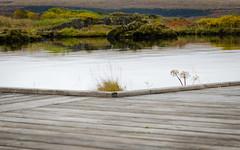 Í Vatnskoti (saraella) Tags: fjölskyldan katla böddi konurogljósmyndirþingvellir þingvellir2015
