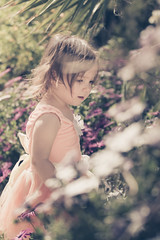 In The Flower Garden (Shooting Ben) Tags: flowers summer baby white flower cute green girl beautiful beauty up sunshine yellow daisies vintage garden happy spring toddler pretty dress princess exploring warmth sunny australia victoria