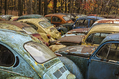 scores. (stevenbley) Tags: buses graveyard vw volkswagen pennsylvania bugs pa vans junkyard scrapyard carparts beetles scrap automobiles autoparts