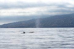 Machico (ItsyBitsyAmi) Tags: ocean travel summer beach portugal island golden sand nikon watching atlantic exotic dolphins tropical d750 whales madeira