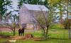 Horse on Amish Farm (newagecrap) Tags: autumn horse wisconsin rural nikon farming rustic barns scenic farms farmbuilding horsefarm nikond3200 farmscenes badgerstate clarkcounty amishbarn ruralwisconsin autumnpictures amishfarmer wisconsinfarm centralwisconsin amishcommunity barnwisconsin wisconsinbarns wisconsinbarn scenicfarm scenicbarn wisconsinamish barnpicture rusticwisconsin barnphoto newagecrapphotography clarkcountywisconsin october2015 grantonwisconsin fall2015 topazimpression barnswisconsin scenesfarm