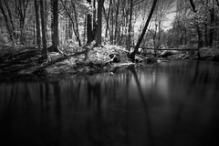 in the shadows (Elliotphotos) Tags: trees reflection tree reflections river ma pond fort rivers brook elliot acton brooks actonma gilfix fortpondbrook elliotphotos elliotgilfix