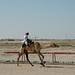 doha camel race (33)