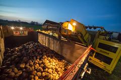 3U4A1608 (Bad-Duck) Tags: vinter mat ropa hst ker betor maskiner kvll skrd flt jordbruk grda lantbruk rstid livsmedel sockerbetor fltarbete livsmedelsproduktion betupptagare omstndigheter