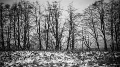 Winter_26 (losing.today) Tags: nature oregon outdoors pacificnorthwest portland pdx portlandor portlandoregon cold coldseason winter trees