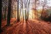 Autumn Sun (Lisa Guhl) Tags: lisa guhl lisaguhl autumn sun leaves colourful sunshines sunbeams trees forest