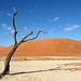 DSC02803 - Namibia 2010 Sossusvlei