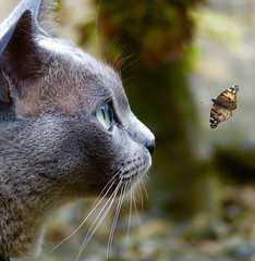 Coming in to land... (Jane.Des) Tags: elements blue burmese butterfly photoshop illusion