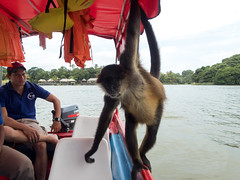 P8171116_LR (CharlieBro) Tags: 2016 centroamerica lagonicaragua lucy nicaragua agosto animal animale august barca boat lago lake lancha monkey natura nature scimmia summer wild