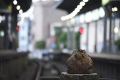 江ノ電・鎌倉駅 ∣ Enoden・Kamakura Station (Iyhon Chiu) Tags: 2016 鎌倉 日本 カエル 春 spring 鎌倉駅 湘南 駅 江ノ島電鉄 江ノ電 enoshimaelectricrailway enoden kamakura japan station railway