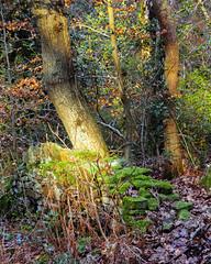 Warming Up (RD400e) Tags: canon eos 5d mk3 bwpolariser gitzo trees wall light shadow 85mm f12 ef