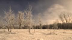 Hoarfrost (Nutzy402) Tags: frost hoarfrost nature trees nebraska white snow icy cold winter frigid bare