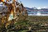 El Abandono 02 (Alejandro...) Tags: abandonado alambrado basura costa ensayo ushuaia