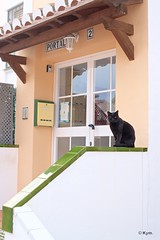 Kitty (Kym.) Tags: andalucía andalusia cat day4 kitty nerja otherpeoplesgang spain