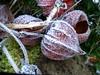 Gesundheit, Zufriedenheit und Glück für 2017 (dorisgoebel) Tags: frost winter pflanze blume flower