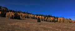 Aspens Up High (The VIKINGS are Coming!) Tags: fallfoliage mountains wyoming tetpns tetons aspens alpine highcountry