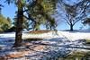 Follow Me (KaDeWeGirl) Tags: newyorkcity bronx nybg botanicalgarden winter snow footprints shadows pine trees