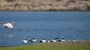 Lüderitz Bay (dieLeuchtturms) Tags: karas 16x9 africa afrika atlantik flamingos khoekhoegowab lagune lüderitz lüderitzbucht meer namibia seeschwalben sternidae sea ǁkaras karasregion