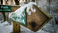 signs of snow (grahamrobb888) Tags: nikon nikond800 sigma20mmf18 sigma zac dog pet trapfocus signs footpath snow snowwoods signpost sign