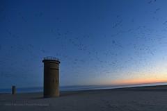 Towers (taylor.michaelj) Tags: mjt nikon d810 1424mm delaware rehoboth beach ocean bay water geese birds sunrise