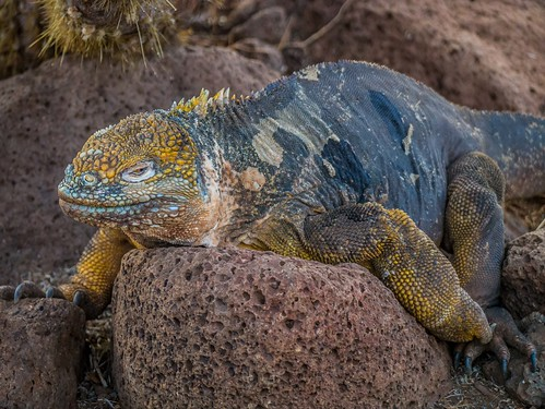 """Galapagos-144.jpg • <a style=""""font-size:0.8em;"""" href=""""http://www.flickr.com/photos/91306238@N04/32433649116/"""" target=""""_blank"""">View on Flickr</a>"""