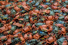 Write down your impression... (beatricechillà) Tags: italy florence mostra arte moderna modern art artist artistic creative chinese aiweiwei colours colourful nofilter installation little crabs magnific magnificent thoughtful amazing amazement nikon nikonphoto nikonphotography photo photography