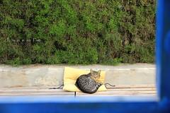 Desde la ventana (nimilpalabras) Tags: ventana gato cat dormir viernes sleep window friday colors almería home