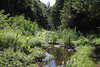 Entre-Deux : le Bras Long (philippeguillot21) Tags: braslong ruisseau entredeux reunion africa indianocean france outremer verdure eau stream pixelistes canon