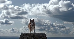 Earth abides (A child in the night) Tags: red dog clouds hope sheepdog chopin kira bordercollie companion ólafurarnalds dogofalifetime alicesaraott