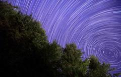 Gig Harbor Star Trails 5 (cookinghamus) Tags: nightphotography trees night stars washington startrails gigharbor starfield