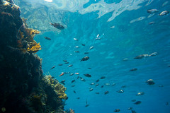 20150802-DSC_3563.jpg (d3_plus) Tags: sea sky fish beach japan scenery underwater diving snorkeling  shizuoka    apnea izu j4  waterproofcase    skindiving minamiizu       nikon1 hirizo  1030mm  nakagi 1  nikon1j4 1nikkorvr1030mmf3556pdzoom beachhirizo misakafishingport  1030mmpd nikonwpn3 wpn3
