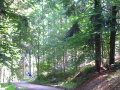 DSCF0834 (JohnSeb) Tags: trees tree forest germany deutschland rboles bosque arbre schwarzwald baum fort badenweiler johnseb bumen eurotour2012