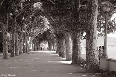 011255 - Coímbra (M.Peinado) Tags: parque blackandwhite bw copyright byn blancoynegro portugal canon árboles coimbra 2015 coímbra canoneos60d distritodecoimbra distritodecoímbra juliode2015 27072015