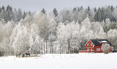 Hlen in frost (Ingunn Eriksen) Tags: frost winter snow hlen vestby norway horses redhouse akershus