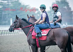 Maylan on a Chatterpaul Trainee (EASY GOER) Tags: horses horse ny newyork sports race canon track running racing 5d athletes races thoroughbred equine markiii