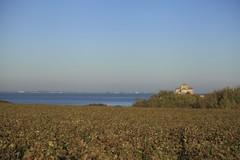 Vendanges 2015 au Vignoble des Hauts de Talmont 13