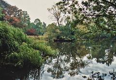 Teich am Morgen (rieblinga) Tags: leica analog ct 100 agfa teich bäume r8 precia