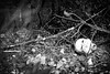 I lost my head somewhere (Solomulala | mostly weekends ;-( !) Tags: autumn bw canon 2015 canon5dmkiii solomulala