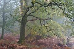 Forest of Dean (Jon Tainton) Tags: oak bracken beech forestofdean leicavarioelmarr35704