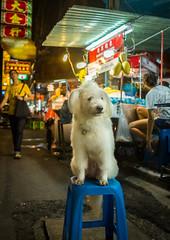 Bangkok Street Dog (gary_p_p) Tags: bangkok streetphotography bangkokstreet