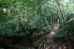 Tintern Woods (Ken Meegan) Tags: wood trees ireland tree river woods tinternabbey cowexford saltmills tinternwoods tinterntrails