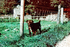 Lake District 2015 | Billy (Eyegelspy) Tags: uk england lomography bessa lakedistrict voigtlnder turqoise r2a